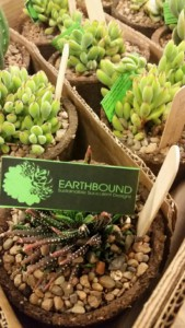 Earth concsious, locally sourced gifts and décor